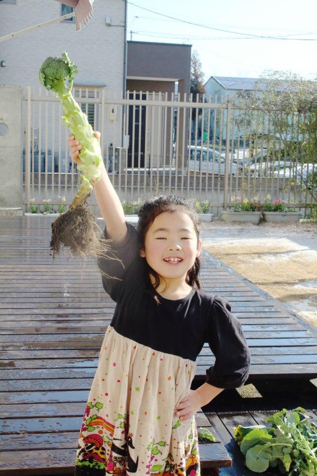 「ブロッコリー」ミニカモちゃん。日比野さんから頂いたブロッ コリー、葉っぱとったらこんな感じになりました。