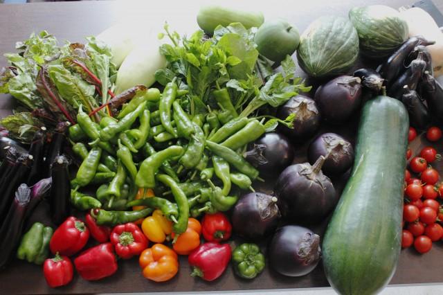 丹波生まれの野菜たち